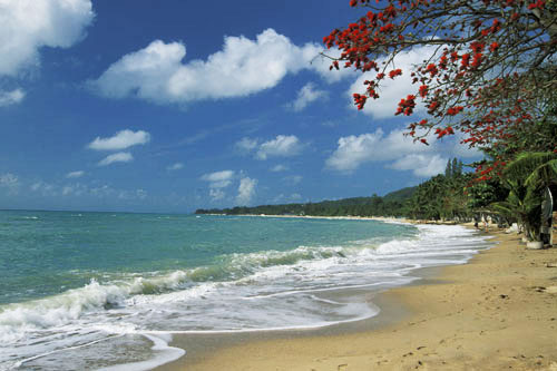 Beach Samui Reservations By Details